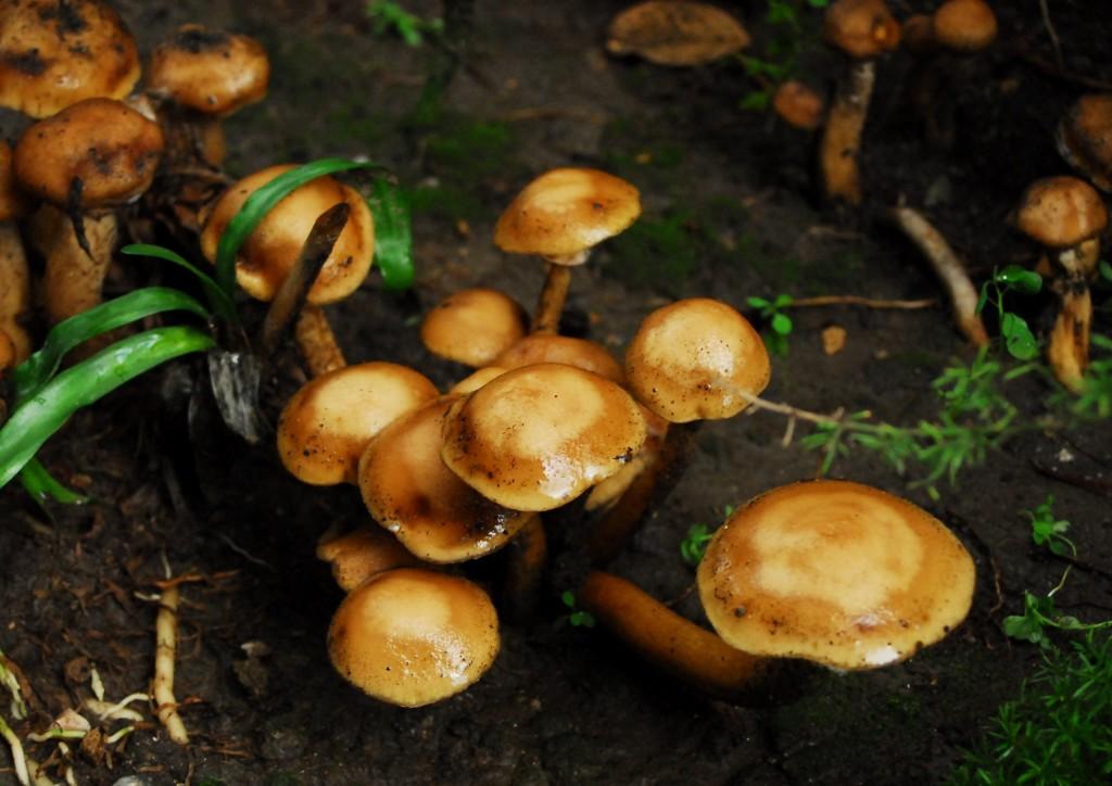 Lovely wild mushrooms